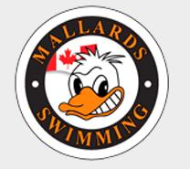 mallards.PNG