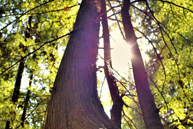 Tree Talk York Scene .jpg
