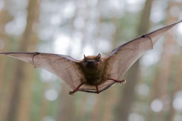 Bats York Scene.jpg